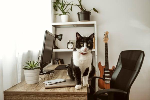 tener-mascotas-en-la-oficina 2